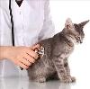 Ветеринарные клиники в Тарногском Городке